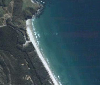 NZ-Surf-Guide_Beach-View_Forestry